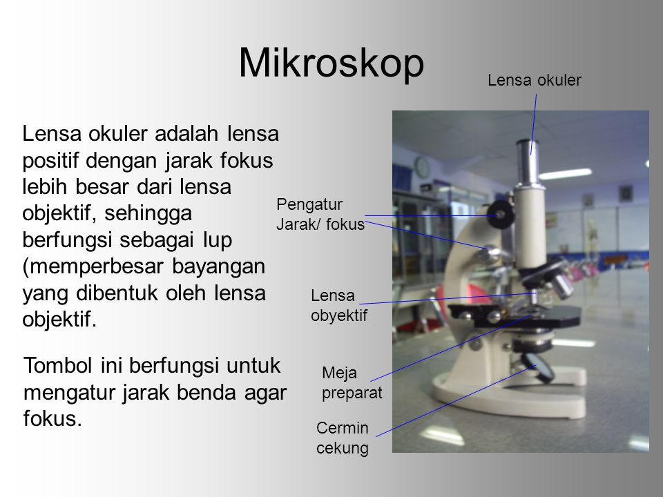 Mikroskop Lensa okuler.