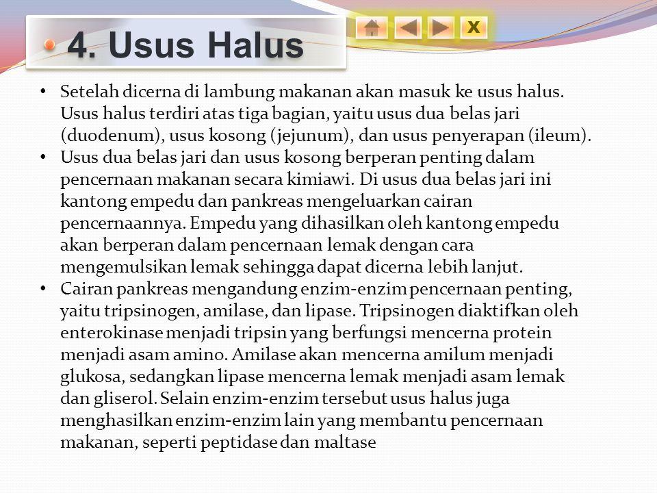 4. Usus Halus X.