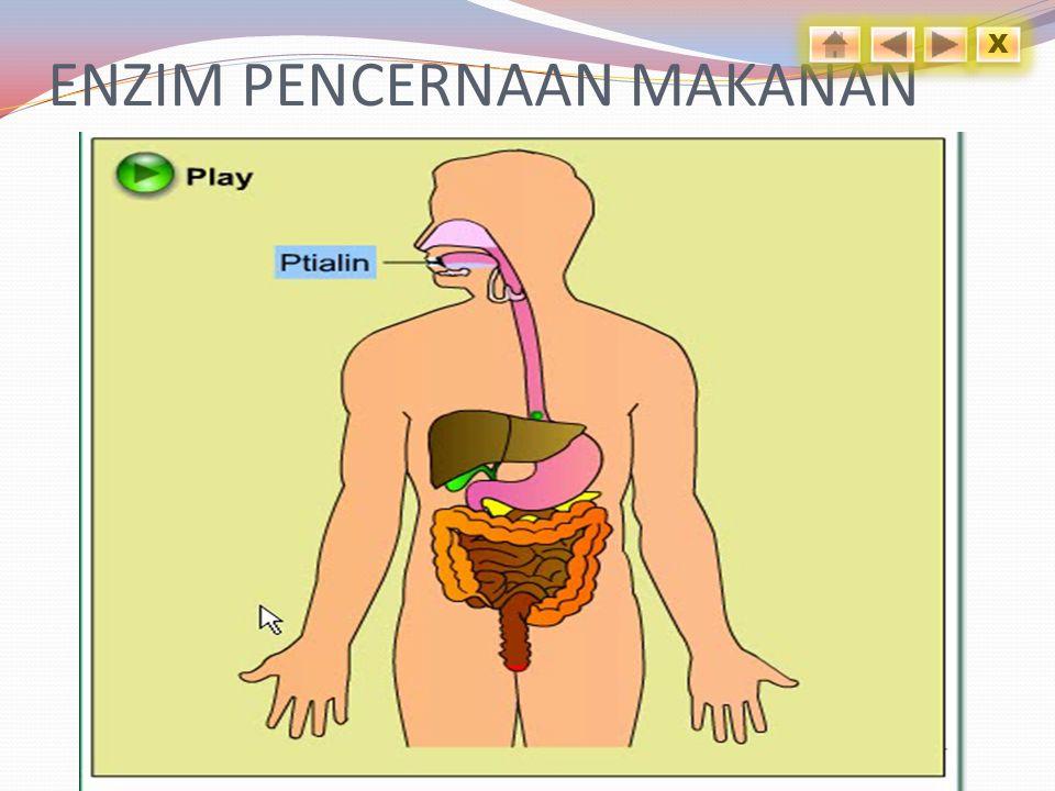 ENZIM PENCERNAAN MAKANAN
