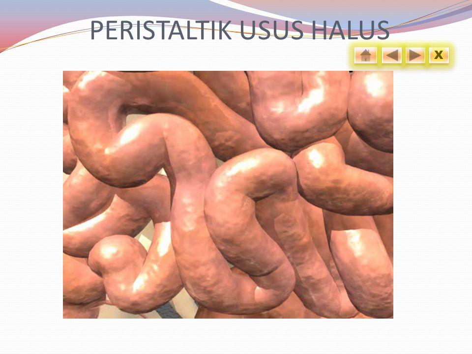 PERISTALTIK USUS HALUS