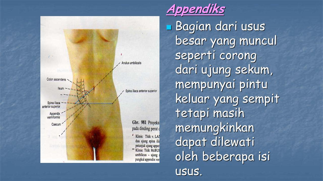 Appendiks