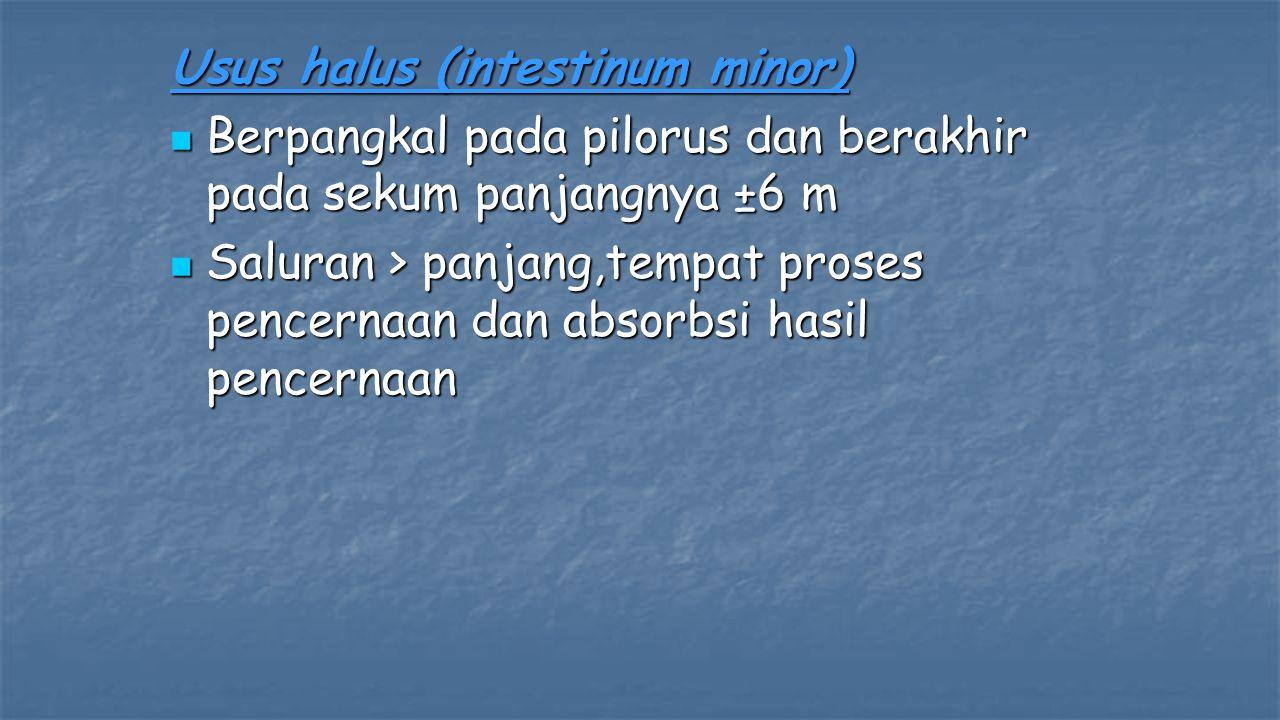 Usus halus (intestinum minor)