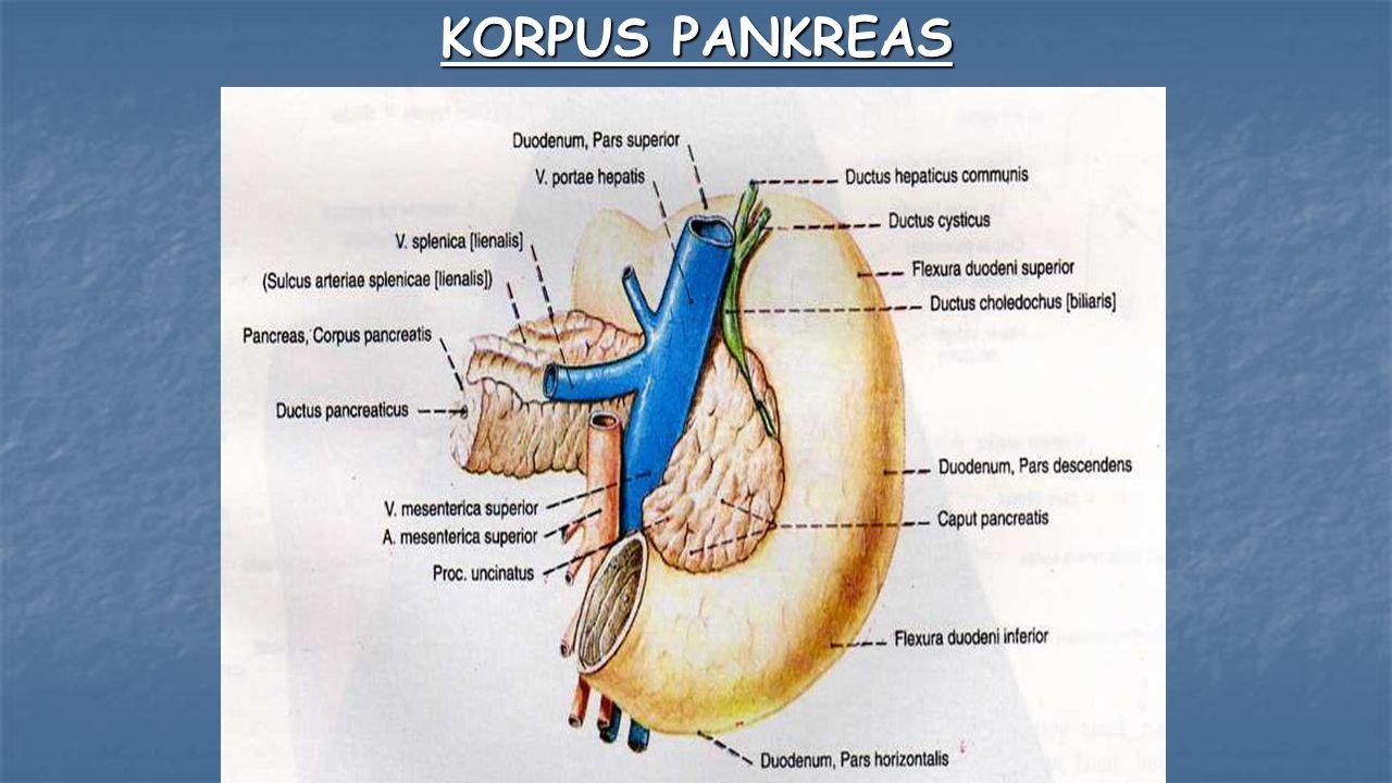 KORPUS PANKREAS