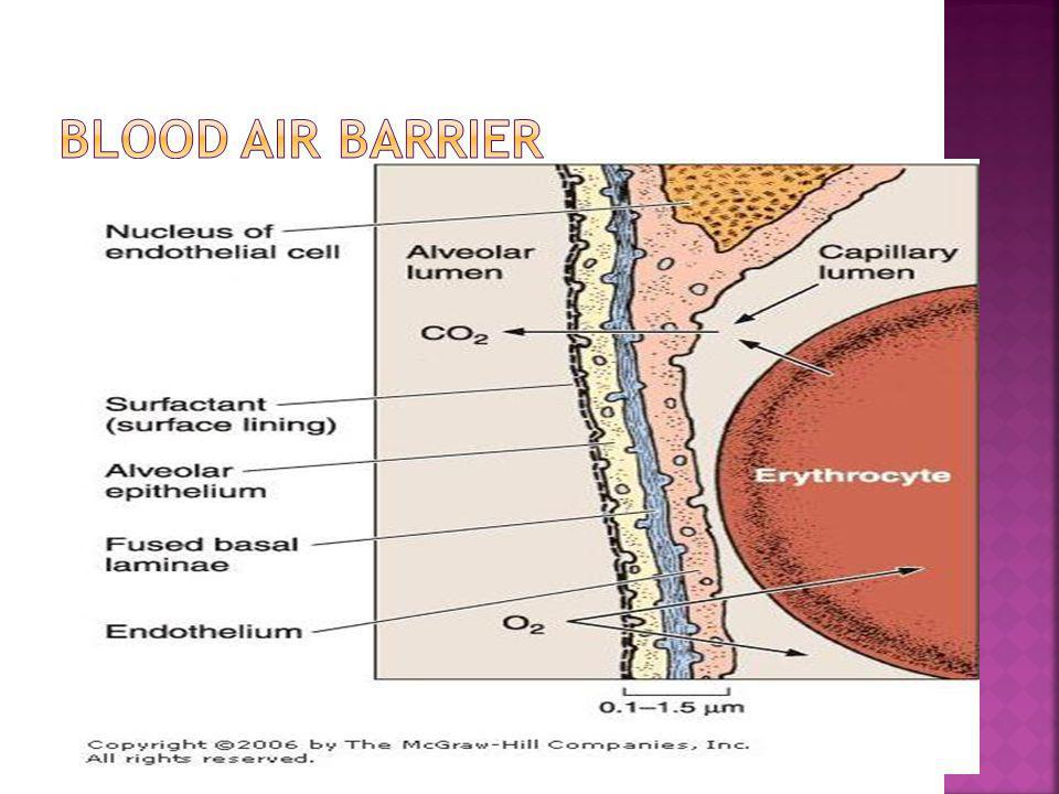 BLOOD AIR BARRIER