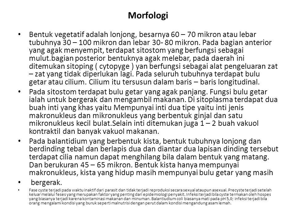 Morfologi