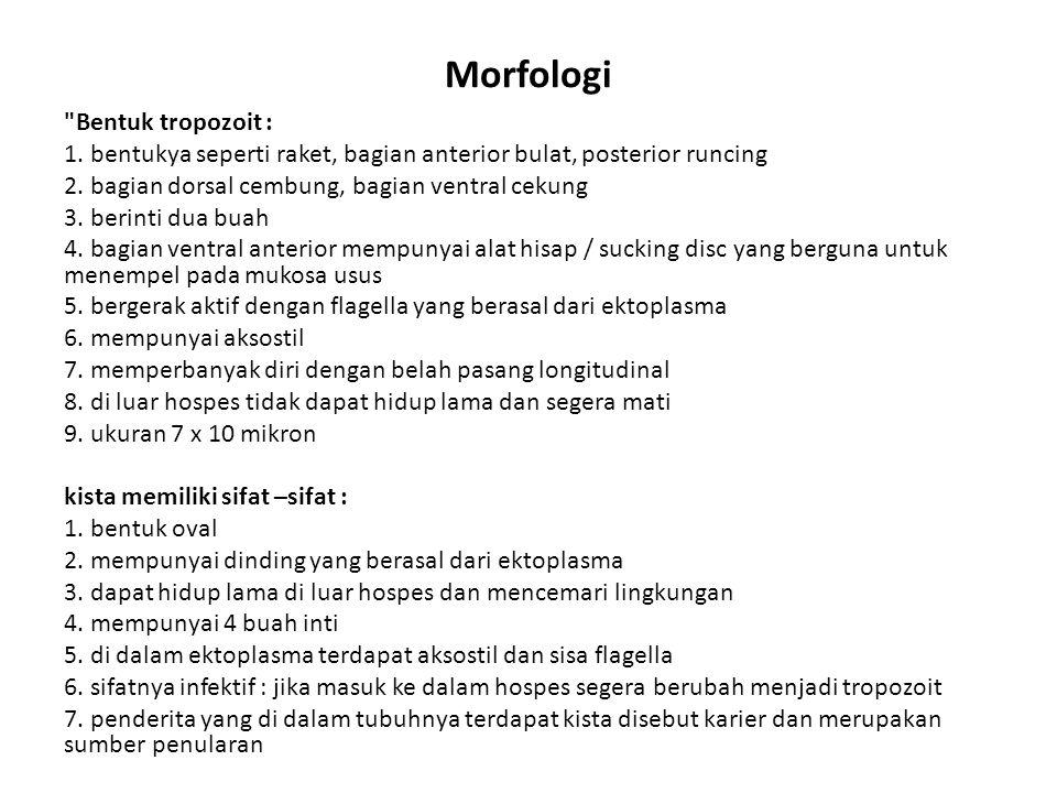 Morfologi Bentuk tropozoit :