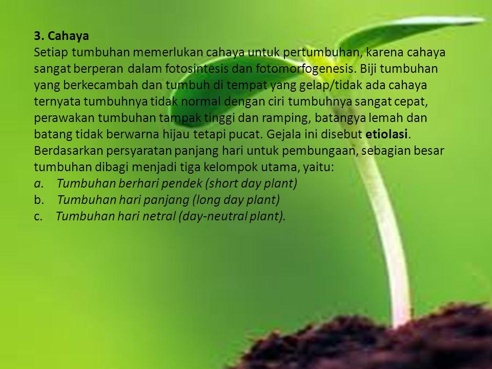 a. Tumbuhan berhari pendek (short day plant)