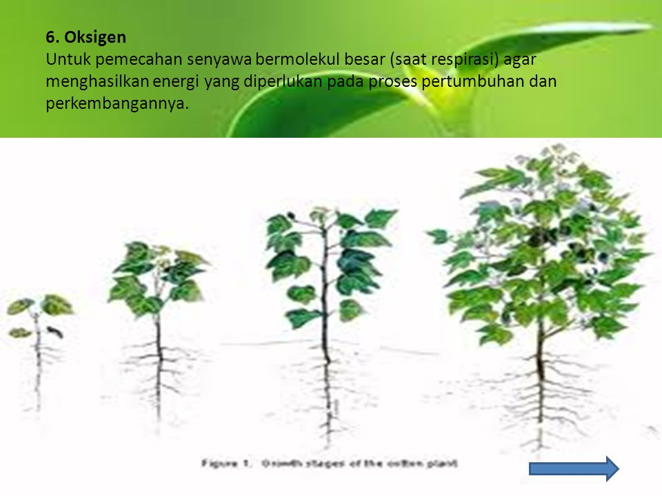 6. Oksigen