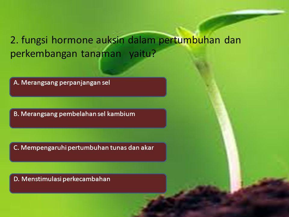 2. fungsi hormone auksin dalam pertumbuhan dan perkembangan tanaman yaitu