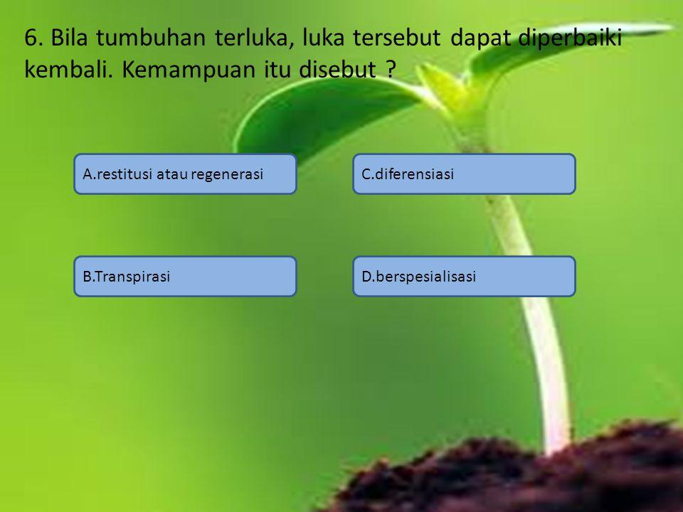 6. Bila tumbuhan terluka, luka tersebut dapat diperbaiki kembali