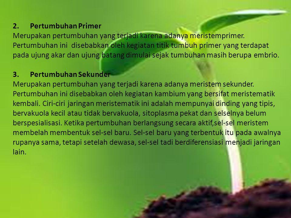 2. Pertumbuhan Primer