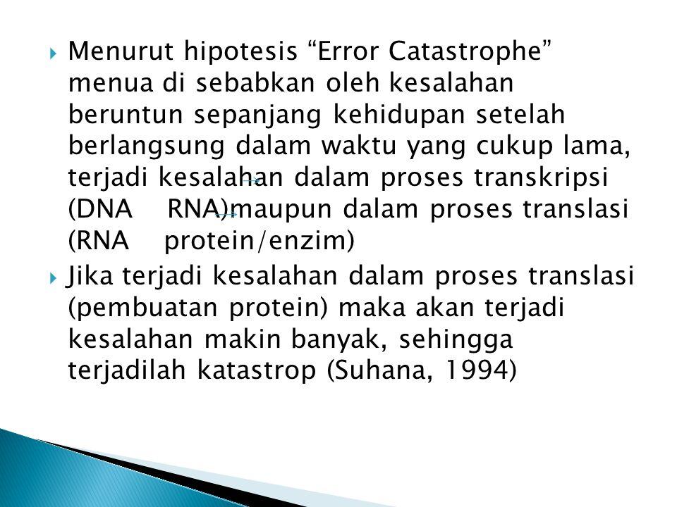 Menurut hipotesis Error Catastrophe menua di sebabkan oleh kesalahan beruntun sepanjang kehidupan setelah berlangsung dalam waktu yang cukup lama, terjadi kesalahan dalam proses transkripsi (DNA RNA)maupun dalam proses translasi (RNA protein/enzim)