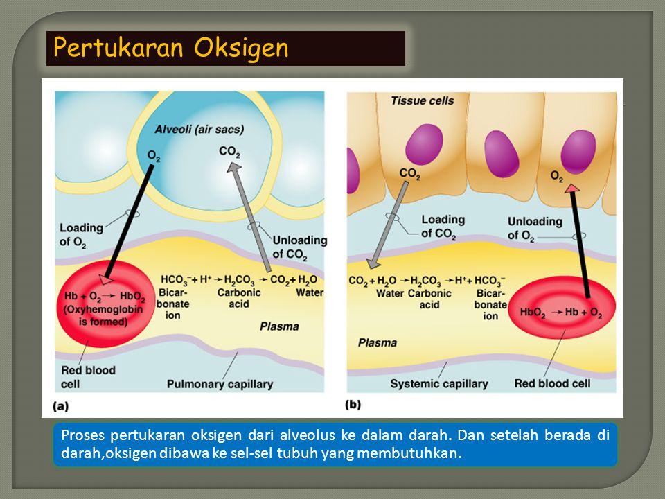 Pertukaran Oksigen