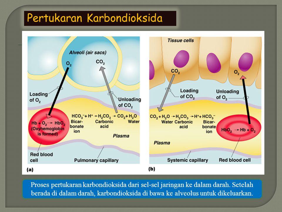 Pertukaran Karbondioksida