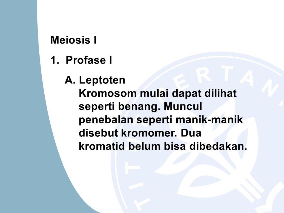 Meiosis I 1. Profase I.