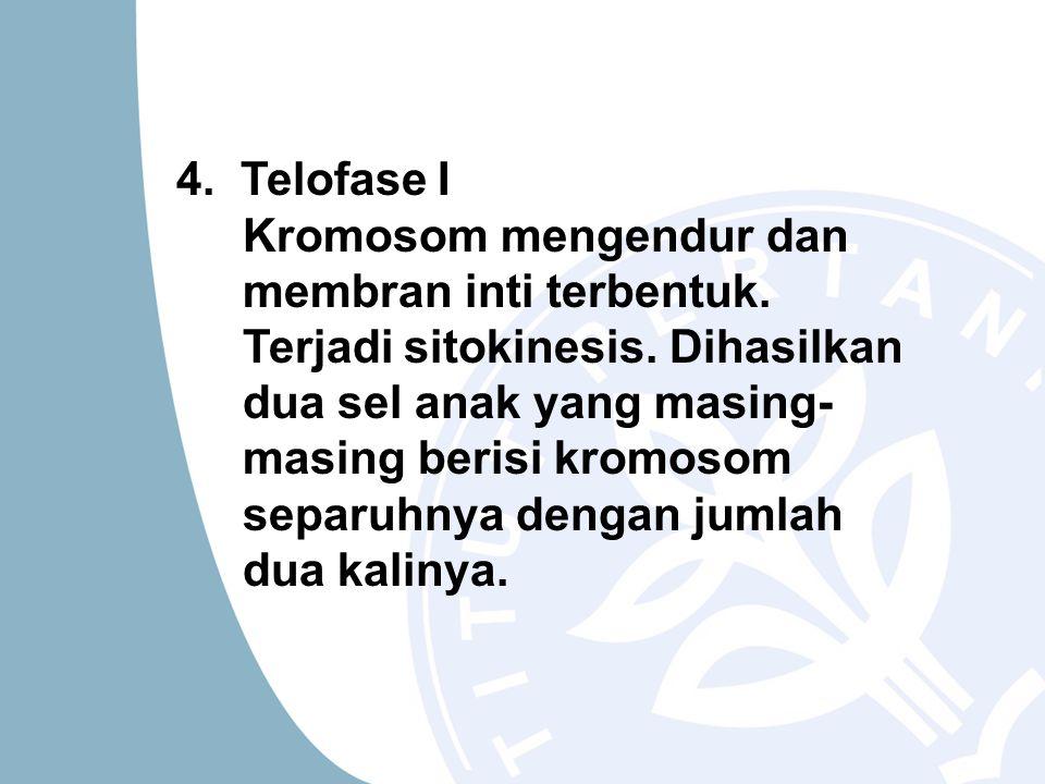 4. Telofase I Kromosom mengendur dan membran inti terbentuk