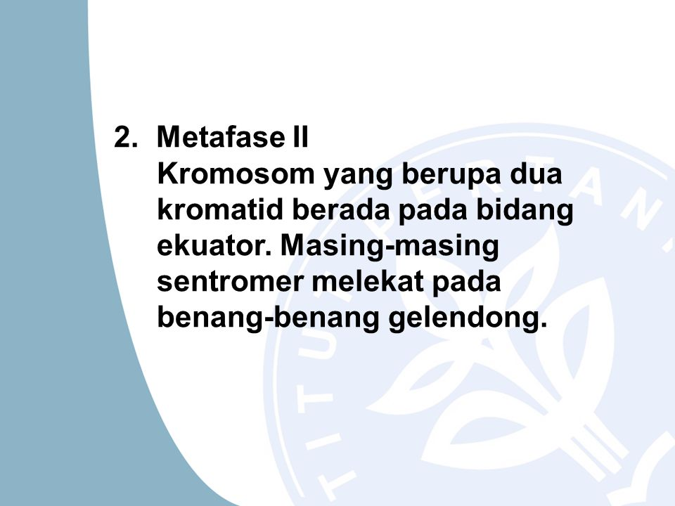 2. Metafase II Kromosom yang berupa dua kromatid berada pada bidang ekuator.