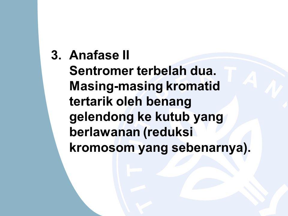 Anafase II Sentromer terbelah dua