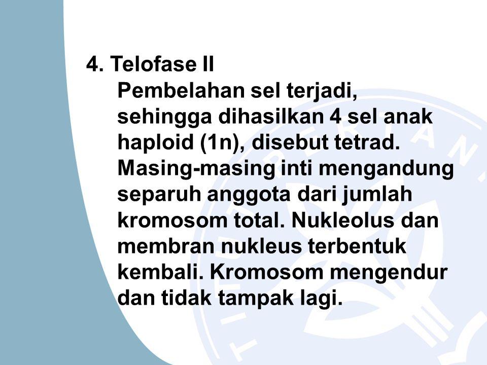 4. Telofase II Pembelahan sel terjadi, sehingga dihasilkan 4 sel anak haploid (1n), disebut tetrad.