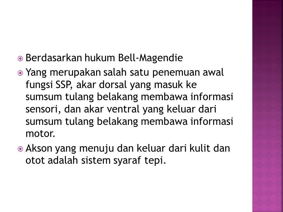 Berdasarkan hukum Bell-Magendie