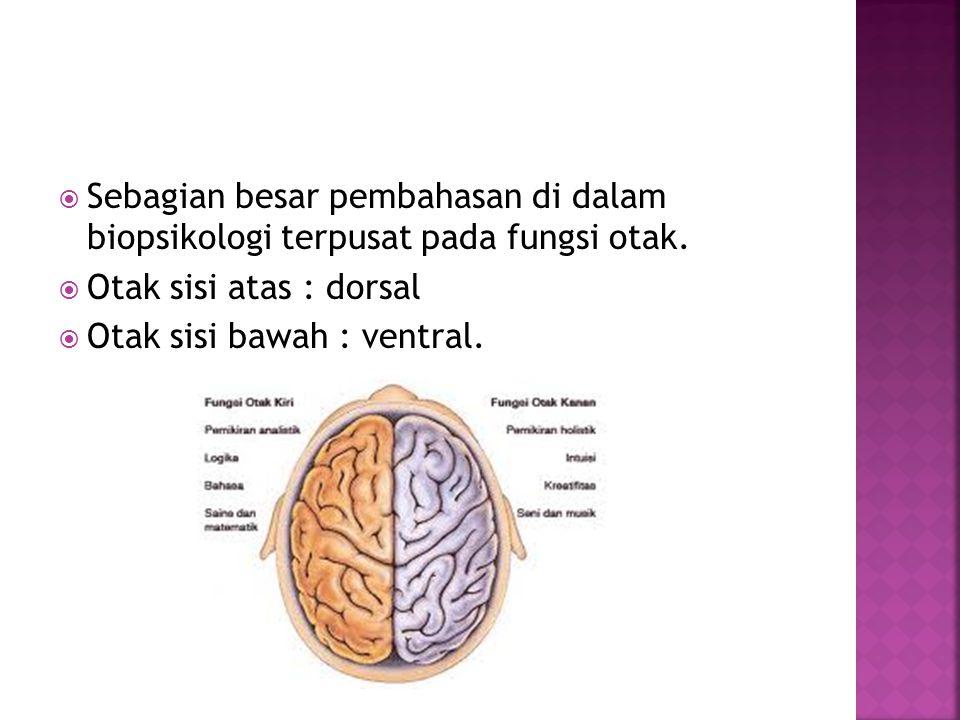 Sebagian besar pembahasan di dalam biopsikologi terpusat pada fungsi otak.