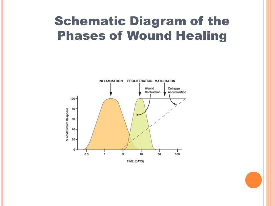 Schematic Diagram of the Phases of Wound Healing