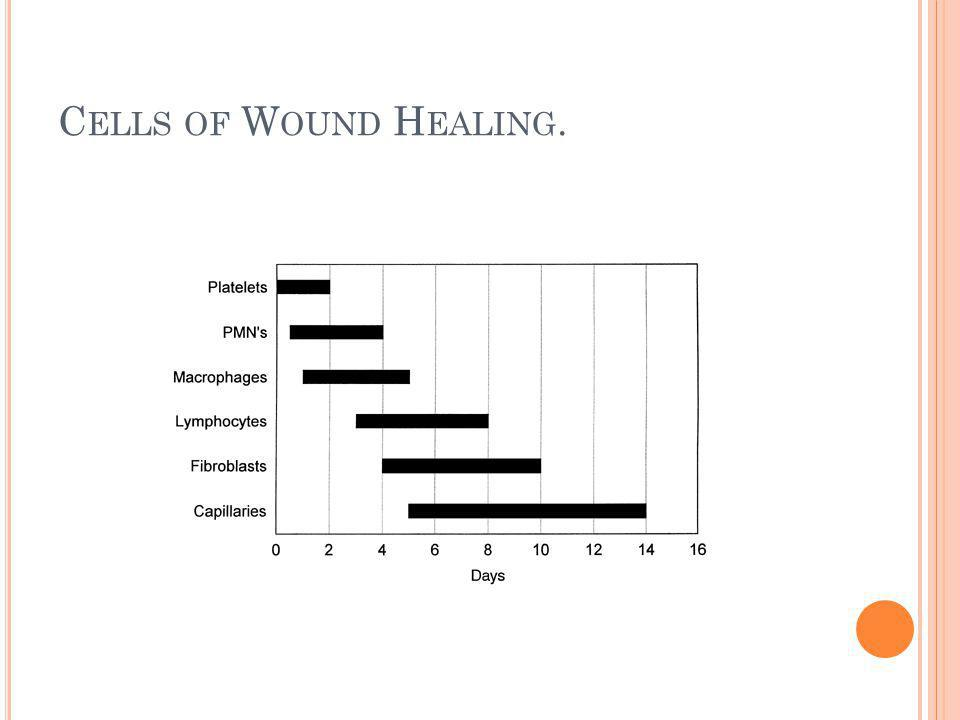 Cells of Wound Healing.