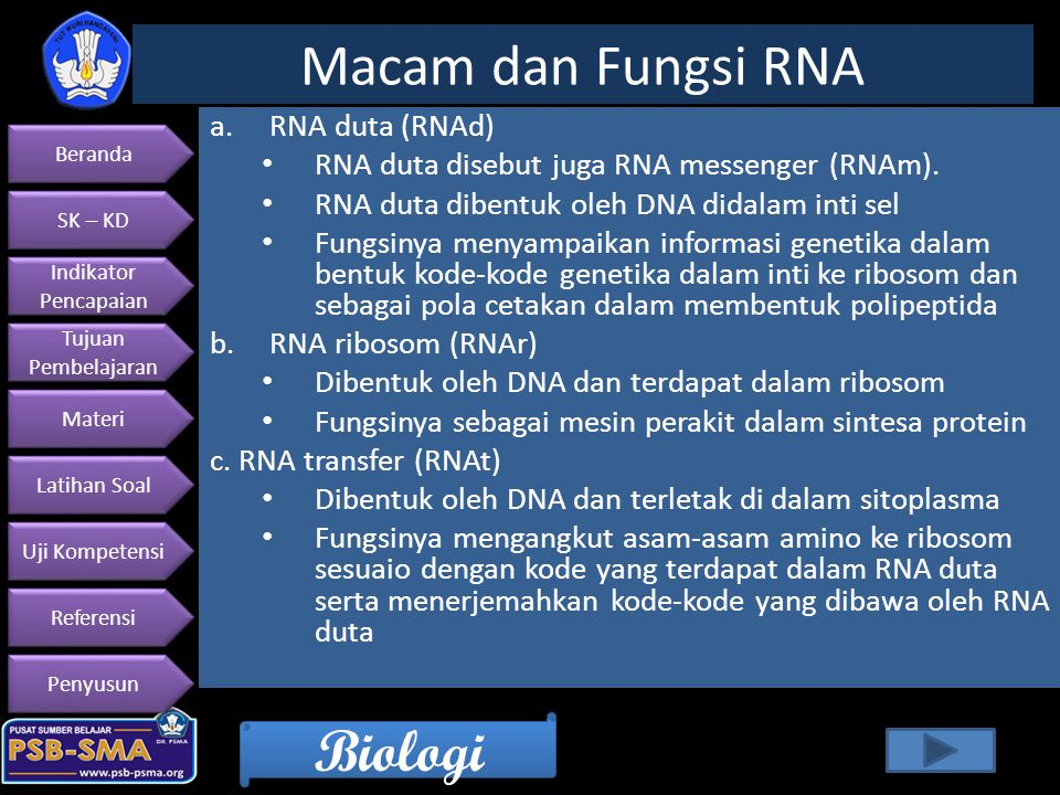 Macam dan Fungsi RNA RNA duta (RNAd)