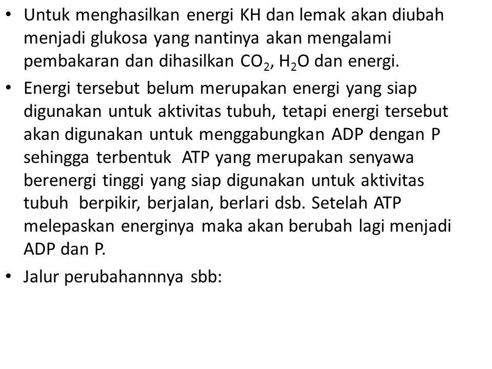 Untuk menghasilkan energi KH dan lemak akan diubah menjadi glukosa yang nantinya akan mengalami pembakaran dan dihasilkan CO2, H2O dan energi.