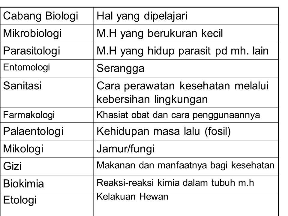 M.H yang berukuran kecil Parasitologi