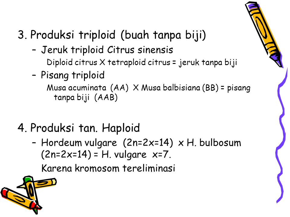 3. Produksi triploid (buah tanpa biji)