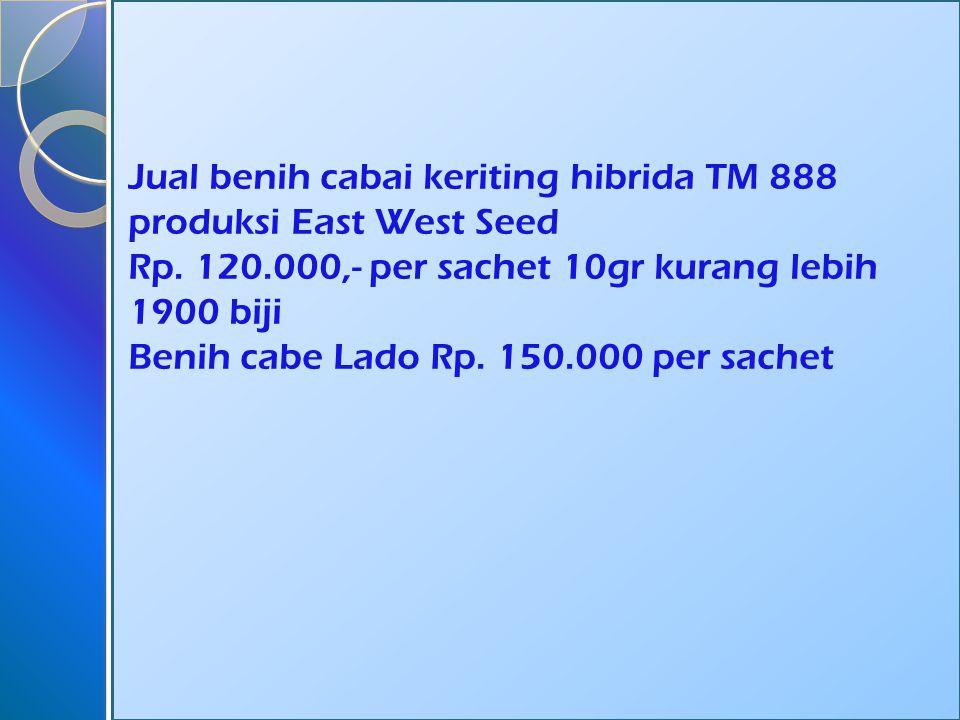 Jual benih cabai keriting hibrida TM 888 produksi East West Seed Rp