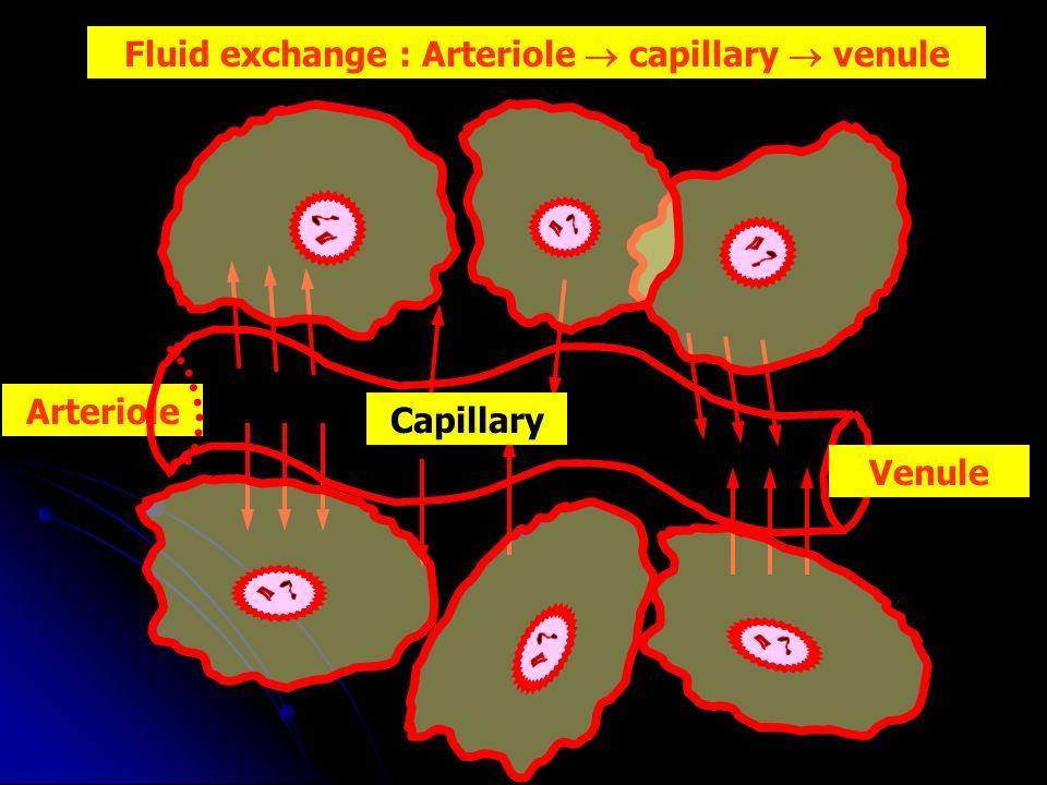Fluid exchange : Arteriole  capillary  venule