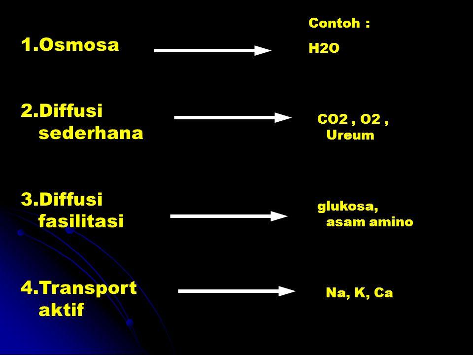Osmosa Diffusi sederhana Diffusi fasilitasi Transport aktif Contoh :