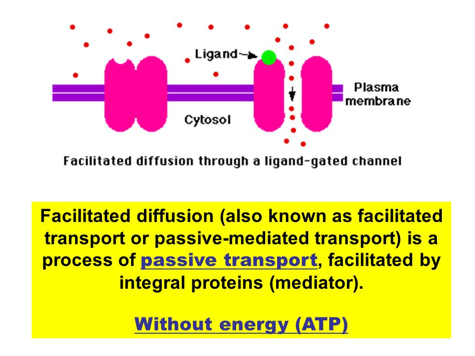 Facilitated diffusion (also known as facilitated transport or passive-mediated transport) is a process of passive transport, facilitated by integral proteins (mediator).