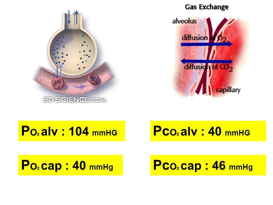 PO2 alv : 104 mmHG PcO2 alv : 40 mmHG PO2 cap : 40 mmHg PcO2 cap : 46 mmHg