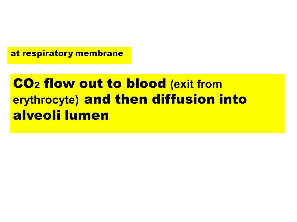 at respiratory membrane