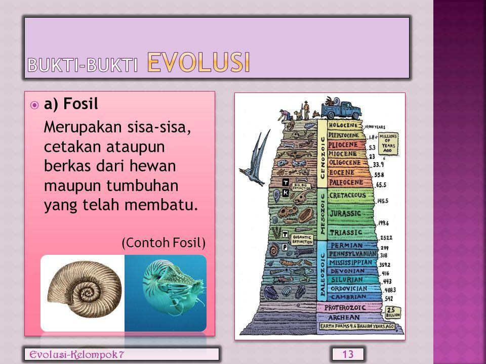 Bukti-bukti evolusi a) Fosil