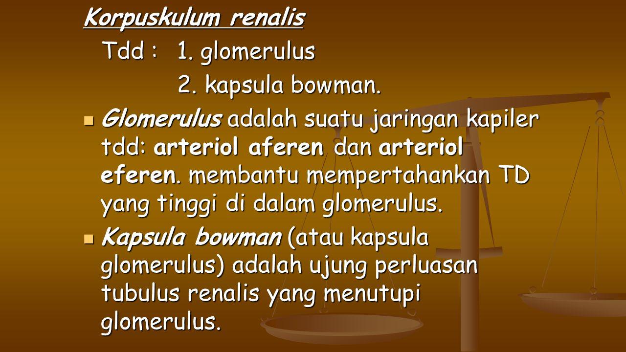 Korpuskulum renalis Tdd : 1. glomerulus. 2. kapsula bowman.