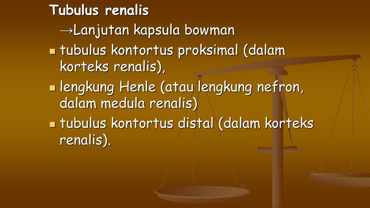 Tubulus renalis →Lanjutan kapsula bowman. tubulus kontortus proksimal (dalam korteks renalis),