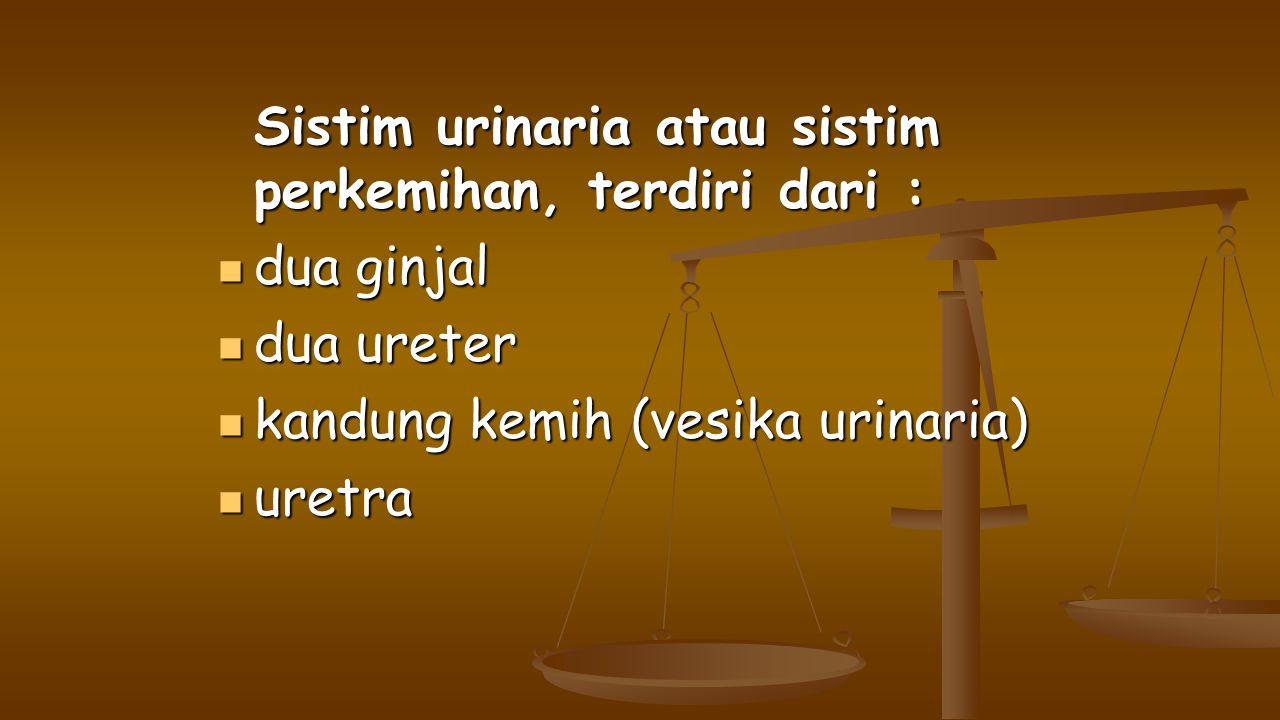 kandung kemih (vesika urinaria) uretra