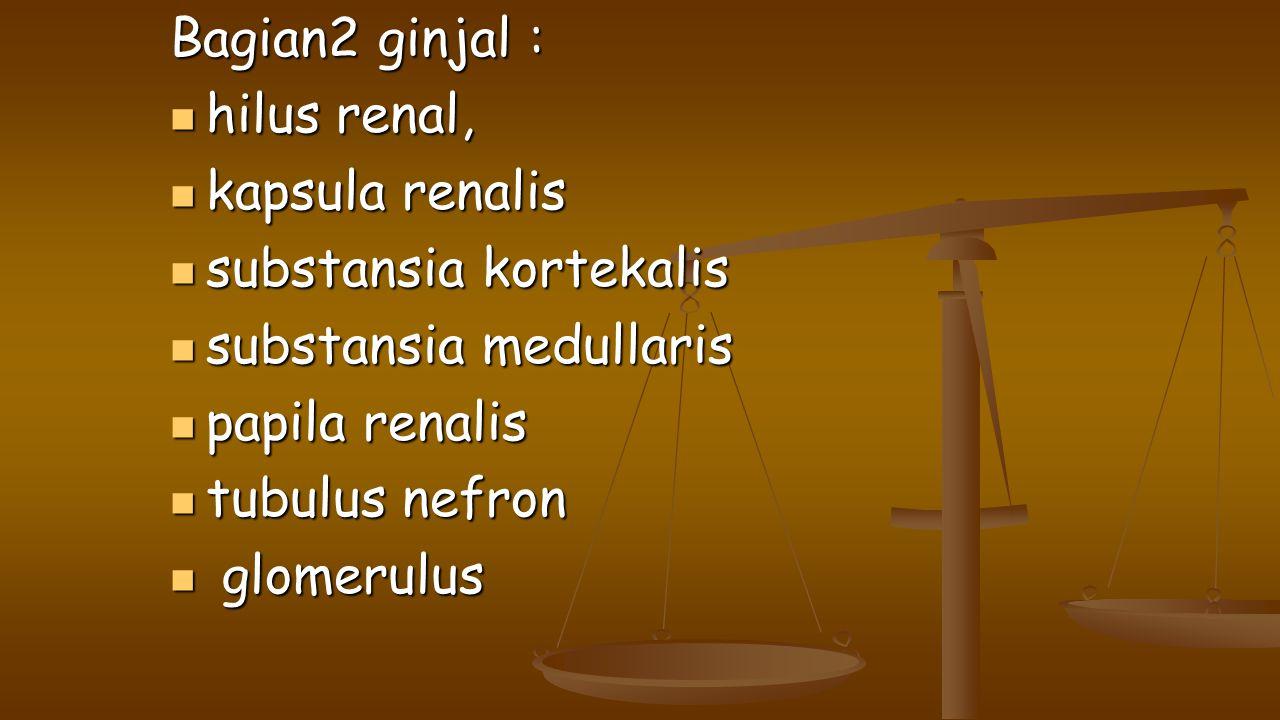 Bagian2 ginjal : hilus renal, kapsula renalis. substansia kortekalis. substansia medullaris. papila renalis.