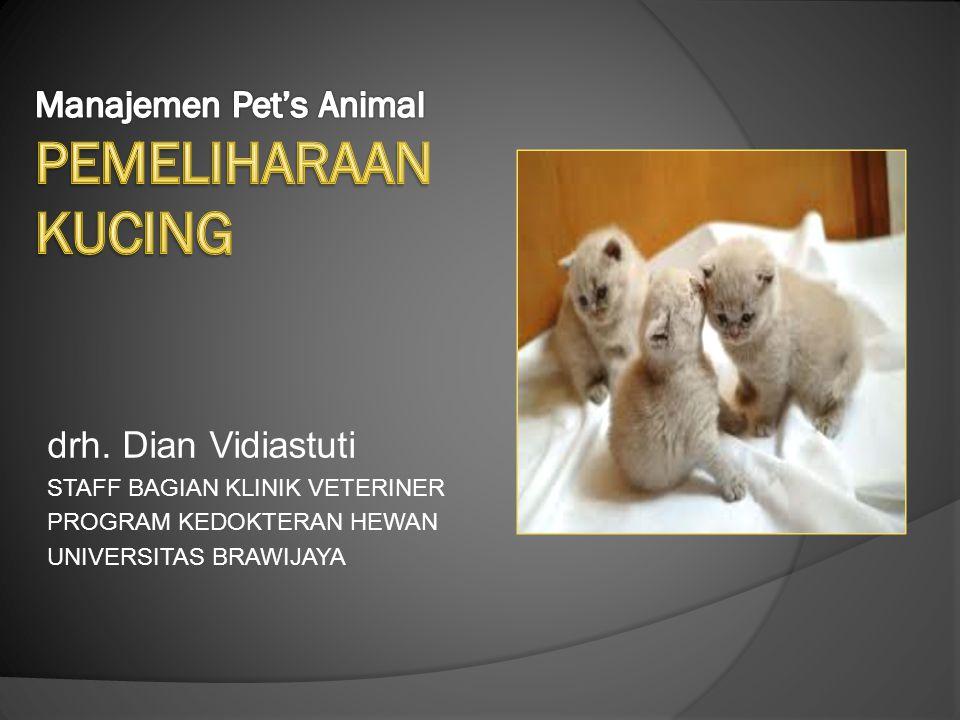 Manajemen Pet's Animal PEMELIHARAAN KUCING