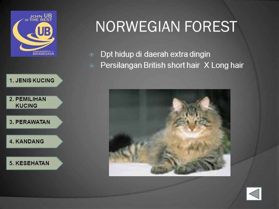 NORWEGIAN FOREST Dpt hidup di daerah extra dingin