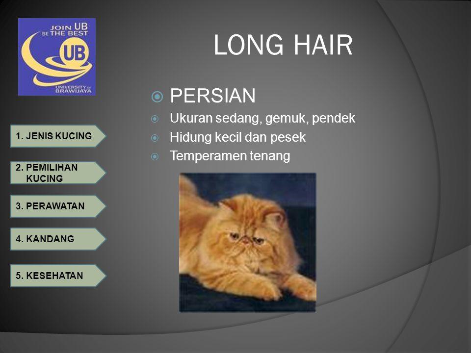 LONG HAIR PERSIAN Ukuran sedang, gemuk, pendek Hidung kecil dan pesek