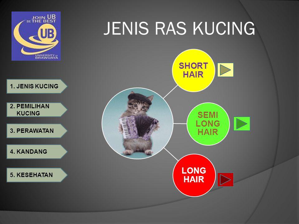 JENIS RAS KUCING SHORT HAIR SEMI LONG HAIR LONG HAIR