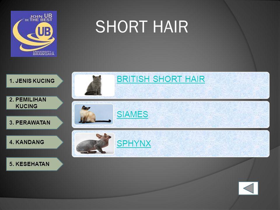 SHORT HAIR BRITISH SHORT HAIR SIAMES SPHYNX
