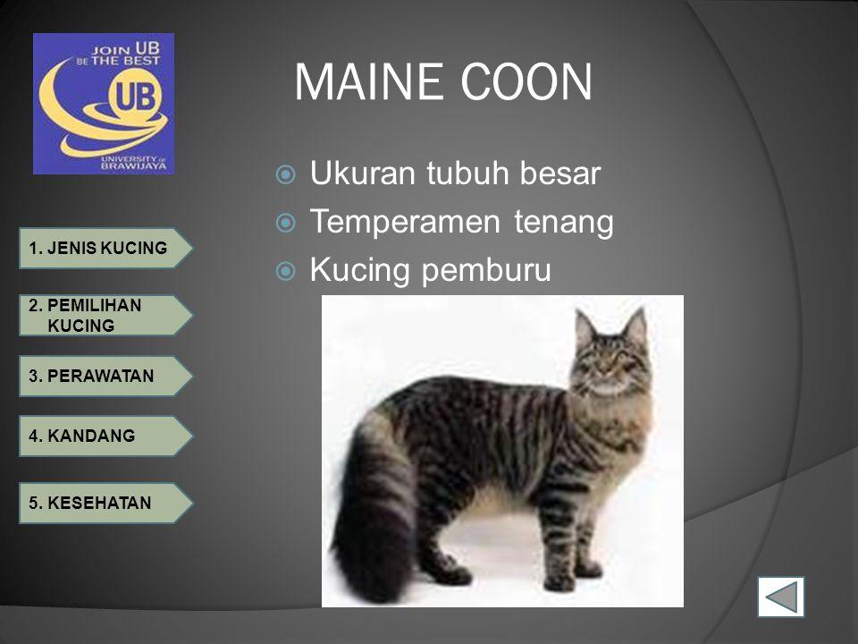MAINE COON Ukuran tubuh besar Temperamen tenang Kucing pemburu