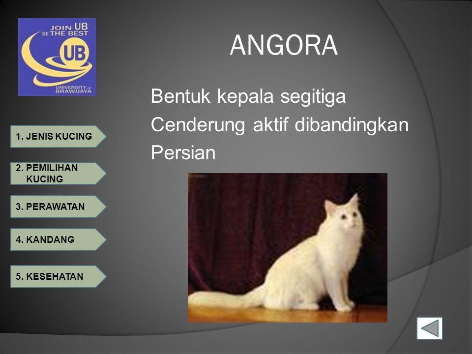 ANGORA Bentuk kepala segitiga Cenderung aktif dibandingkan Persian