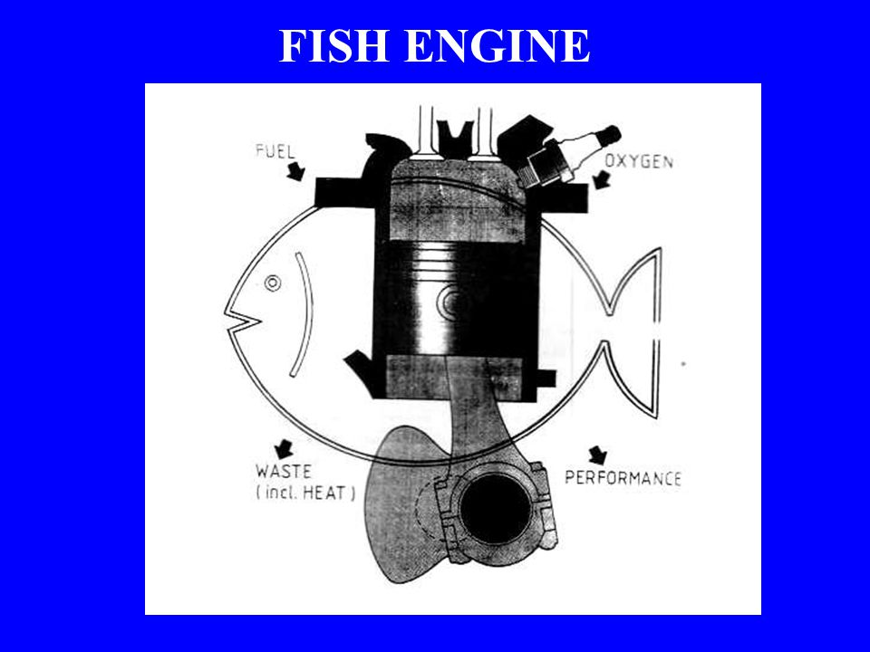 FISH ENGINE